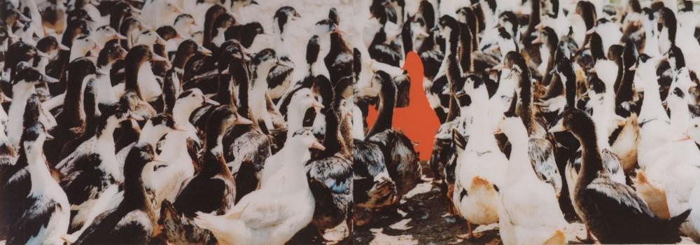 1994-z.t.- Dordogne , foto's, lak, perspex, 200x70cm