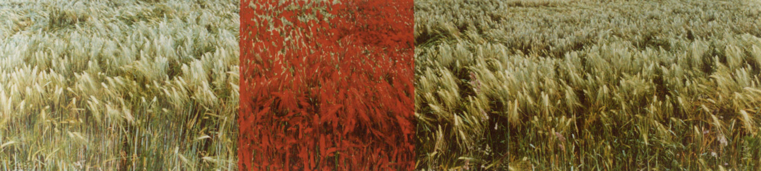 1995-z.t. Ettingshausen 2- foto's, lak, 300x90cm