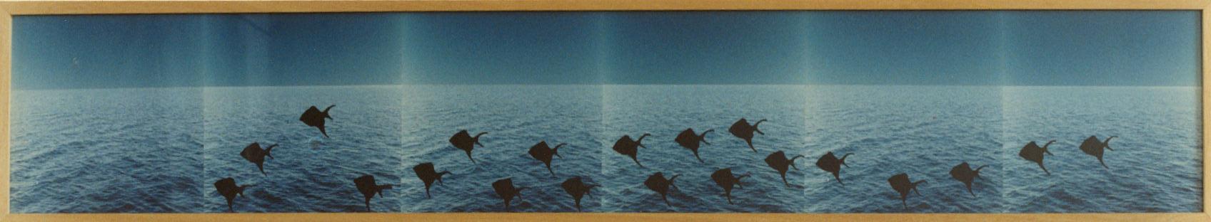 1996-School van slag- foto's, lak, 32x175cm