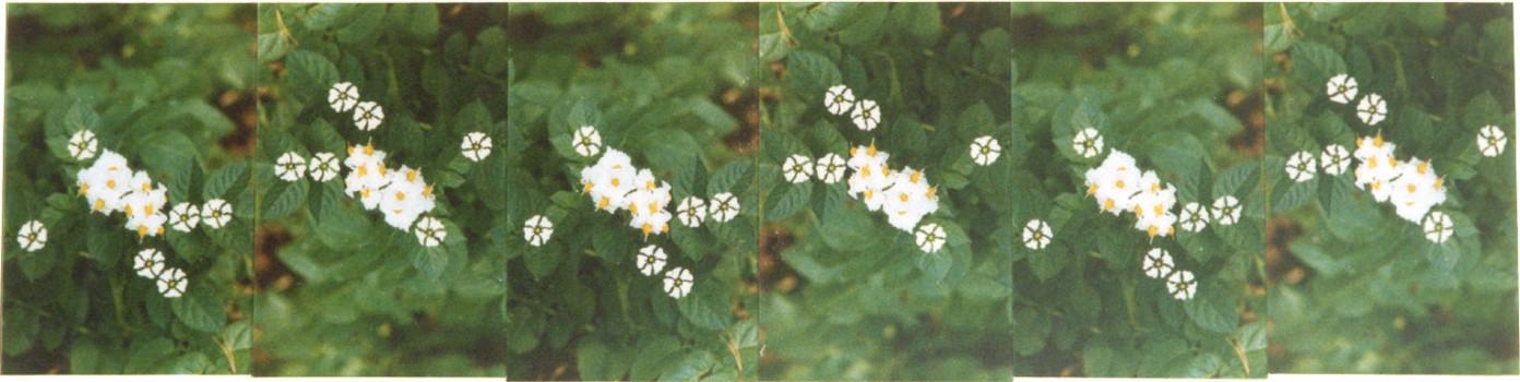 1997-Nachtschade- foto's, lak, perspex, 180x44cm