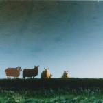 1997-Upside down- foto, lak, perspex, 50x70cm