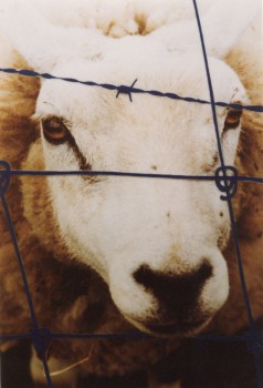 1999-Poserend model-1- foto, lak, 59x40cm