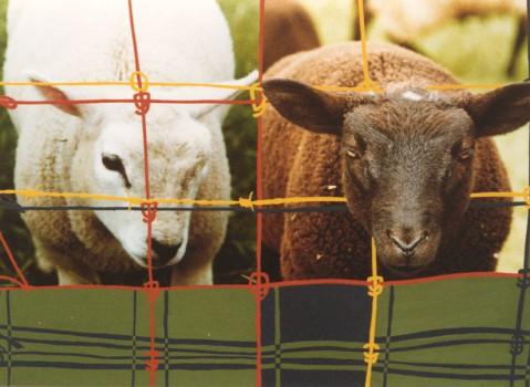 1999-Schaap en schotse ruit- foto's, lak, 65x80cm