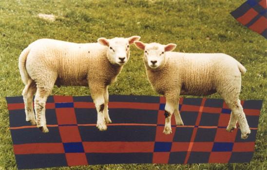 1999-Vol van wol- foto, lak, 50x70cm