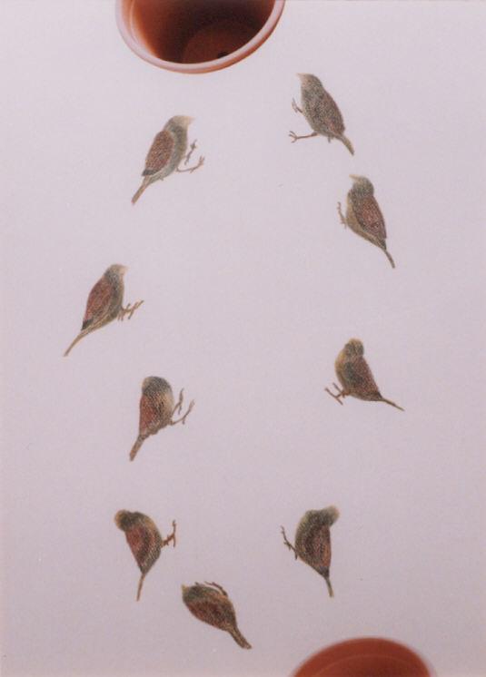 2003-z.t.- mussen met plantenpot - collage, foto's, kleurpotlood, 71x52cm