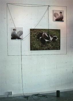 2006-projekt Piet Paaltjens, Pand Paulus, Schiedam