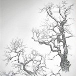 2007-2-zonder titel, grafiet op papier, 122x82cm