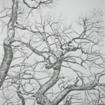 2007-6-zonder titel, grafiet op papier, 122x82cm