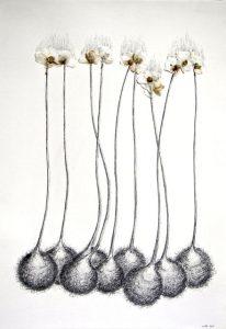 Zonder wind, grafiet en gedroogde bloemen op papier, 97x67 cm 2015